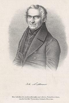 Porträt von Johann Natterer