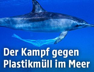Plastik hängt an der Flosse eines Delphins