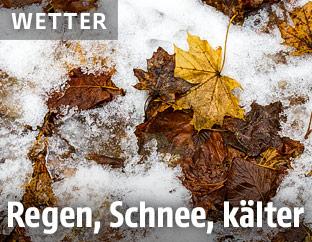Schnee auf Herbstlaub
