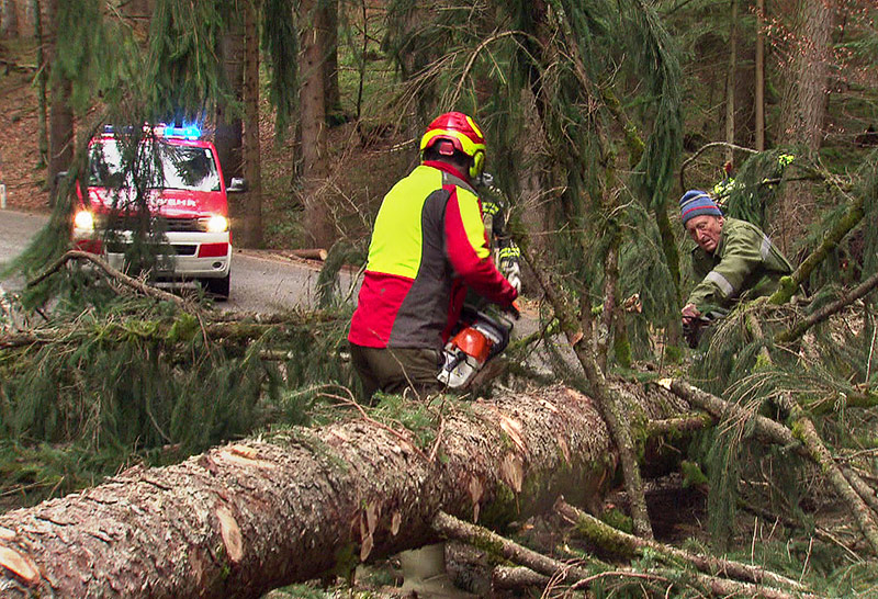Feuerwehrmänner schneiden einen umgestürzten Baum in Stücke
