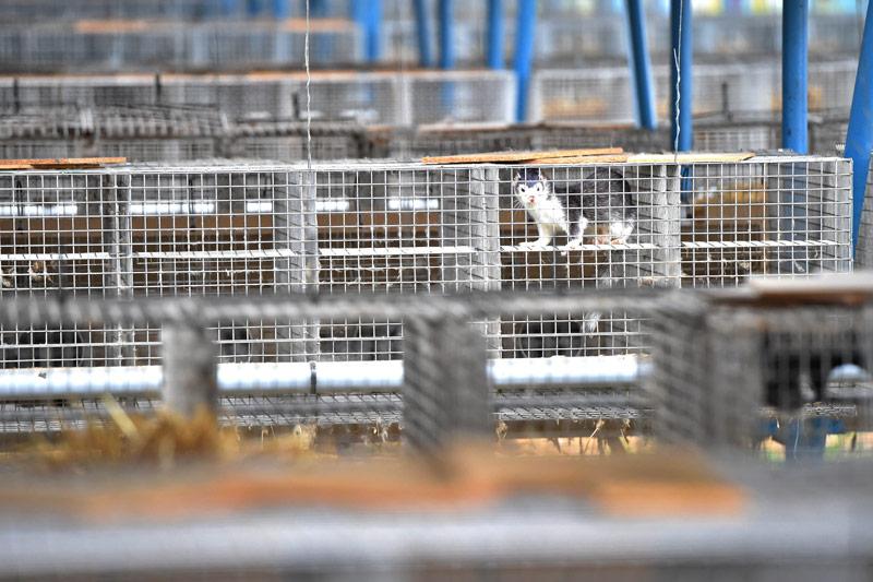 Käfige in einer Pelzfarm