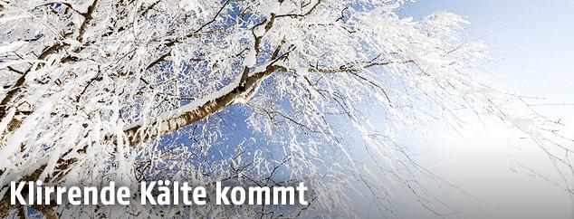 Frostiger Schnee auf einem Baum
