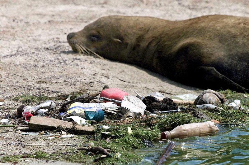 Robbe und Plastikmüll auf einem Strand