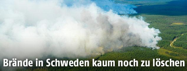 Rauchsäule über schwedischen Wald
