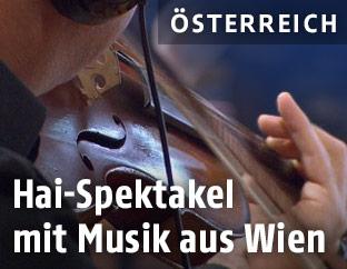 Violinspieler